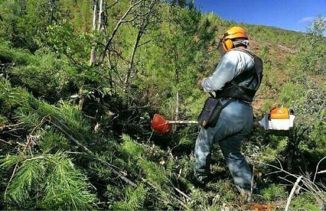 Ayudas para la limpieza de montes