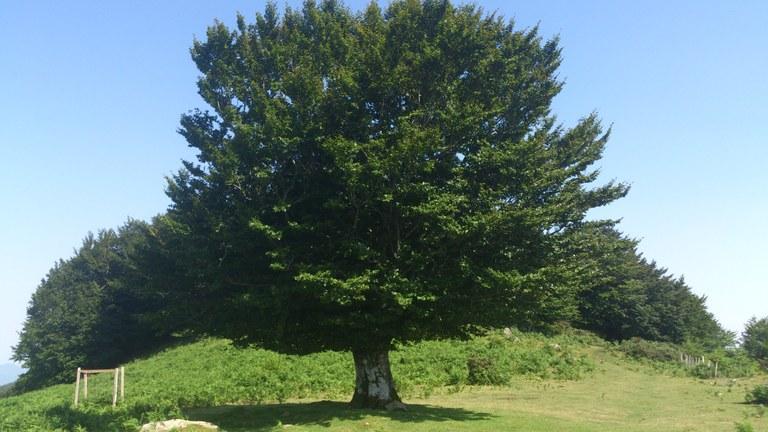 Concurso fotográfico sobre árboles autóctonos