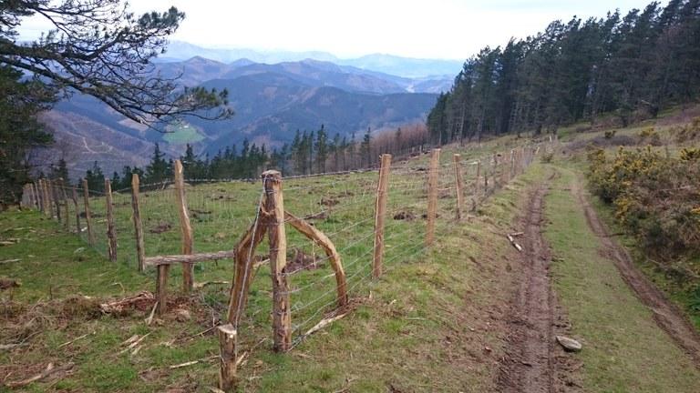 Plantación de árboles en mendigain