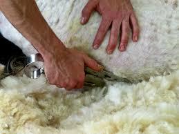 Servicio de recogida de lana