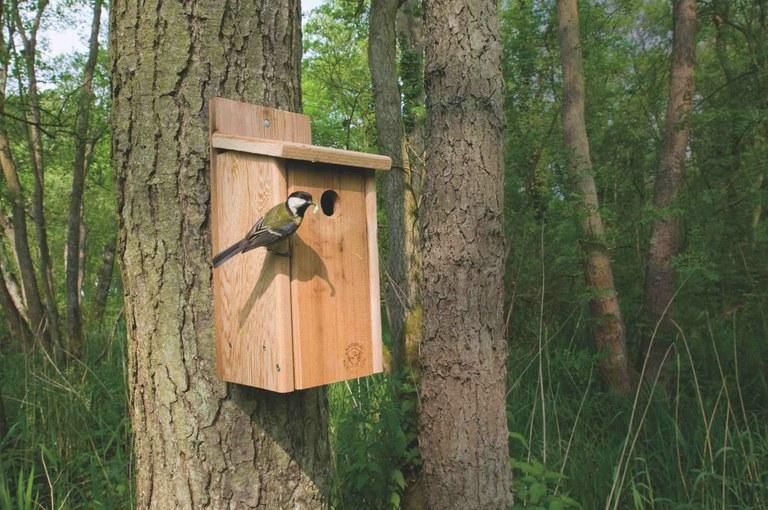 Taller para confeccionar nidos de pájaro